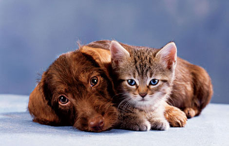 Cat-and-dog-1yv7h7v